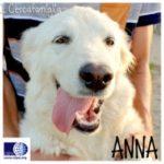 ANNA (TURSI)