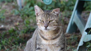 gatti-di-elo-oipa-pistoia-12-1600x1200