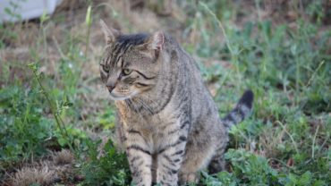 gatti-di-elo-oipa-pistoia-18-1600x1200