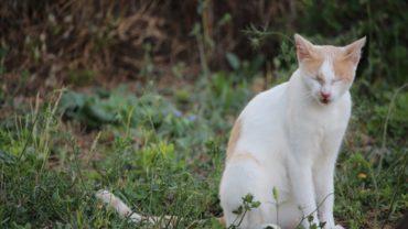 gatti-di-elo-oipa-pistoia-24-1600x1200