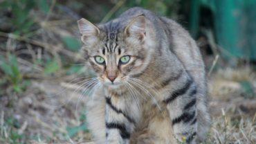 gatti-di-elo-oipa-pistoia-29-1600x1200