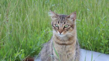gatti-di-elo-oipa-pistoia-8-1600x1200
