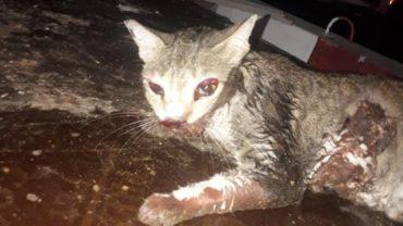 dubai_cat_injured-1600x1200