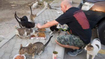 dubai_feed_stray_cats_fawaz-1600x1200