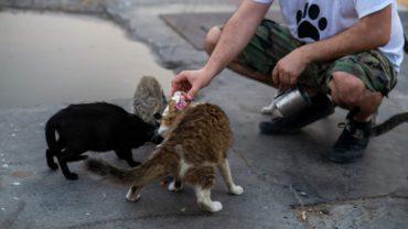 feed_dubai_cats_strays-1600x1200