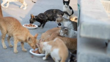 feed_dubai_stray_cats-1600x1200