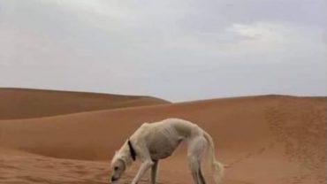sick_dog_dubai_desert-1600x1200