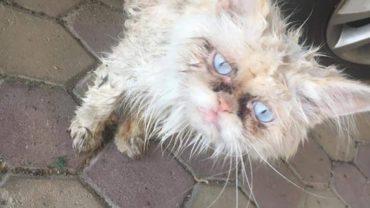 sick_stray_cat_dubai-1600x1200
