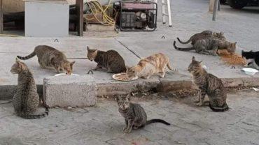 straycats_dubai-1600x1200
