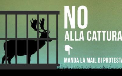 NO ALLA CATTURA E AL TRASFERIMENTO DEI DAINI DEL LIDO DI VOLANO (FE): PARTECIPA AL MAILBOMBING