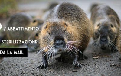 NO ALLO STERMINIO DELLE FAMIGLIA DI NUTRIE DEL PARCO TEODORICO DI RAVENNA: PARTECIPA AL MAILBOMBING