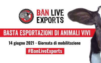 #BANLIVEEXPORTS, LA GIORNATA INTERNAZIONALE CONTRO L'ESPORTAZIONE DI ANIMALI VIVI: GLI ANIMALI SONO ESSERI SENZIENTI, È ORA DI DIRE BASTA!