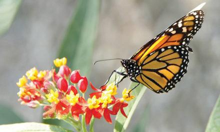 La farfalla e la resurrezione