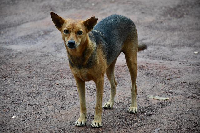 RESPONSABILITÀ PER DANNO CAGIONATO DA ANIMALI: DIRETTA FACEBOOK DELLO SPORTELLO LEGALE OIPA E IUSLAW WEBRADIO