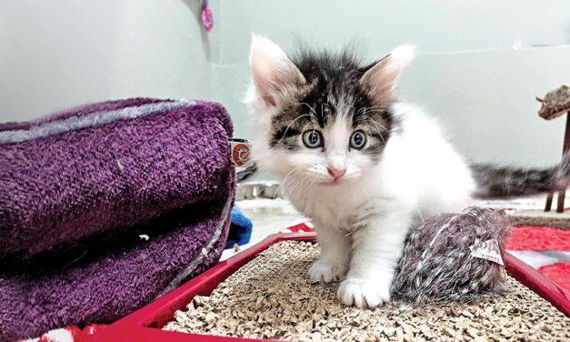 Adottare un gatto? La guida OIPA per una scelta responsabile